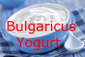 Bulgaricus Iogurte Infinito – com Frete Grátis
