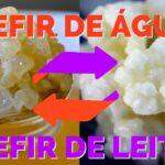 Combo – KEFIR DE LEITE + KEFIR DE ÁGUA – com Frete Grátis 1